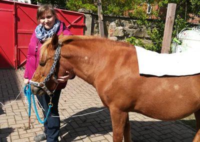 Pferd bioresonanz Therapie